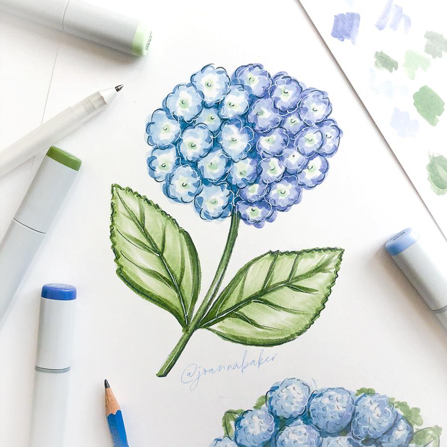 Hydrangea Illustration by Joanna Baker